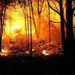 ArtyJ Photography | Wildfire, Bushfire, Commercial, Australia, NSW, Photography | Bushfires + NSW Rural Fire Service | Commercial