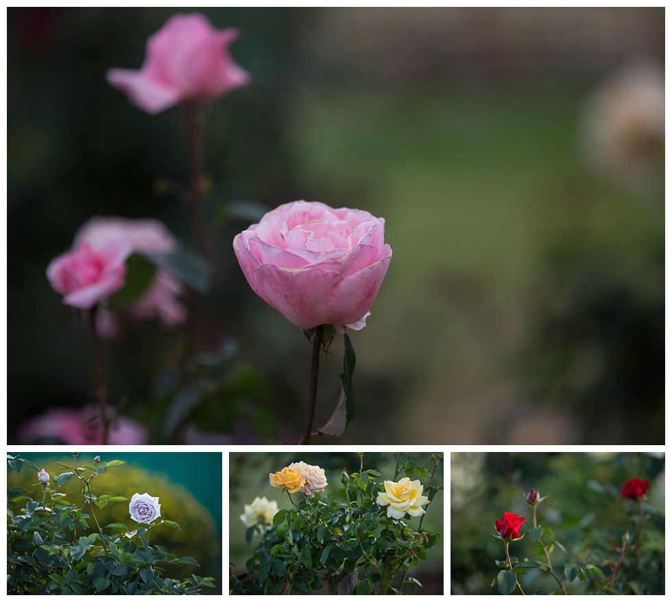 ArtyJ Photography | Australia, NSW, Hunter Valley, Photography | Betty's Garden