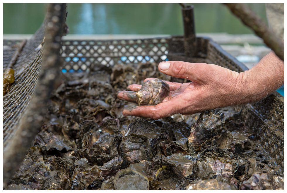 ArtyJ Photography | Commercial, Photography | Armstrong Oysters - Farmer Magazine | Commercial