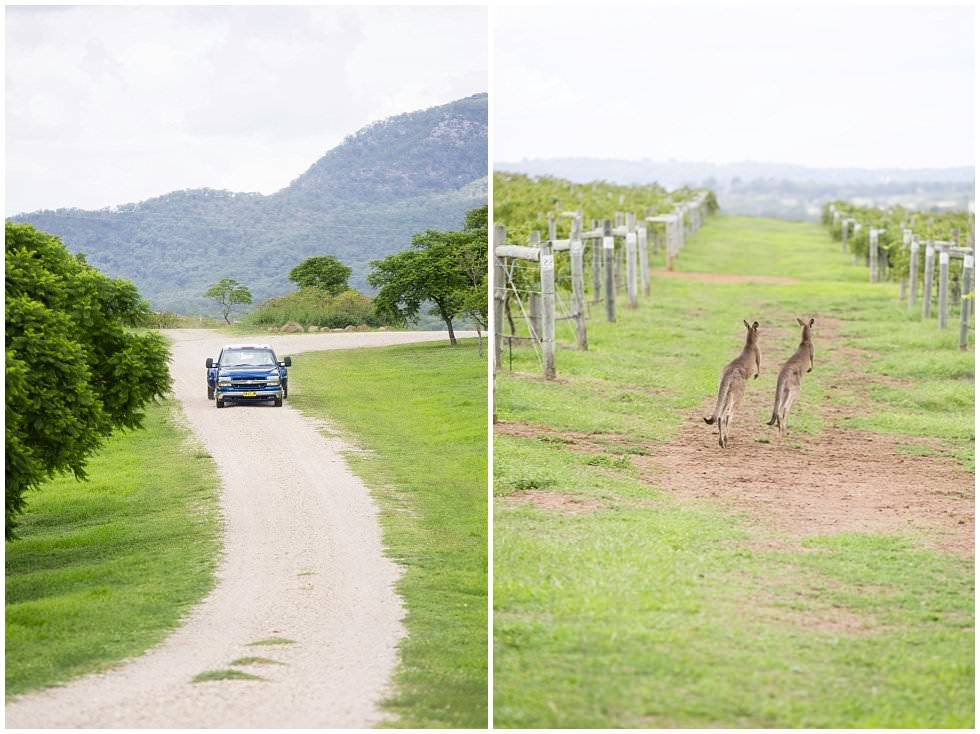 ArtyJ Photography | Elope in the Vines, Worthingtons Vineyard, Trish Wise, Summer Elopement, Pokolbin, Australia, NSW | Danielle & Jacob | Elopement